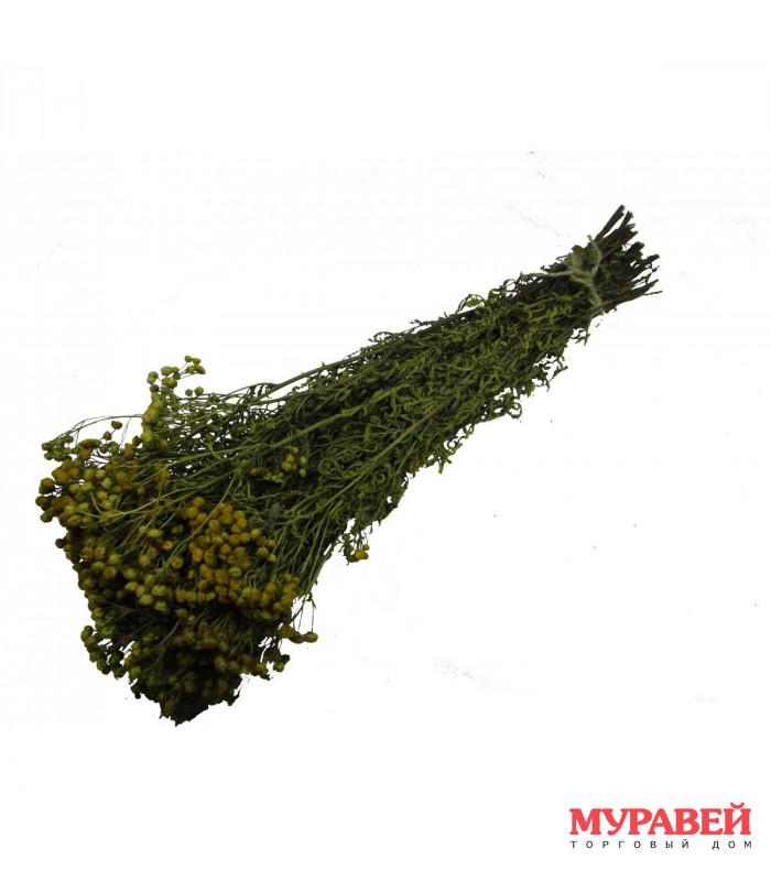 Трава -запарник (пижма)